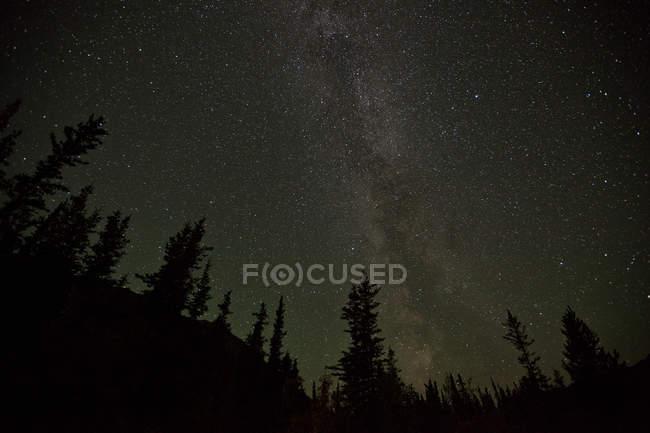 Чумацький шлях над силуети дерева в лісі Юкон, Канада. — стокове фото