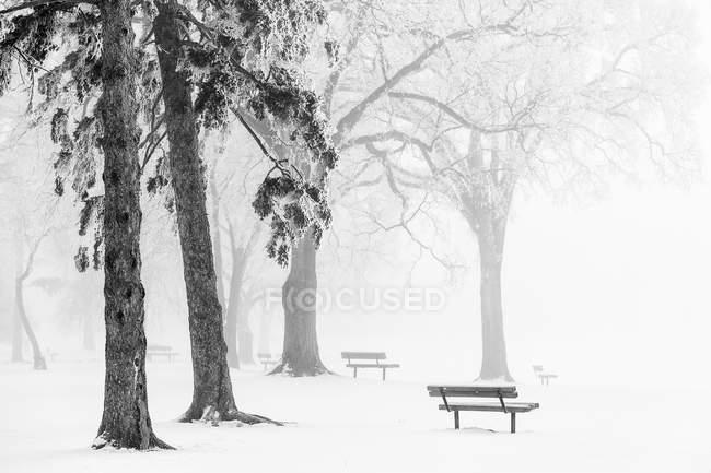 Nebbia di ghiaccio che copre alberi e panchine nel Parco Assiniboino, Winnipeg, Manitoba, Canada — Foto stock