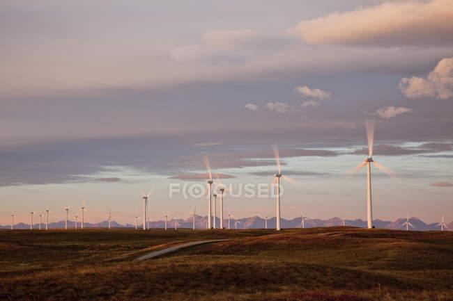 Power-generating windmills operating at dawn near Fort Macleod, Alberta, Canada. — Stock Photo