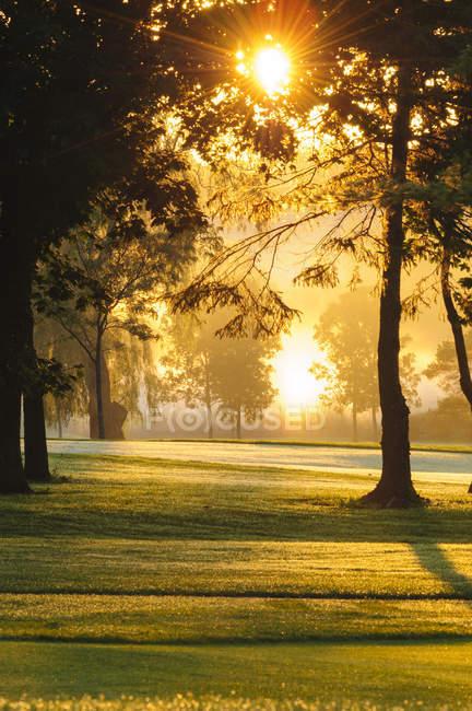 Солнечный свет, струящийся сквозь деревья, поле для гольфа Merry Hill на восходе солнца возле Guelph, Онтарио, Канада — стоковое фото