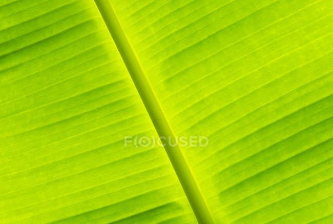 Nahaufnahme des grünen Bananenblatt, full-frame — Stockfoto