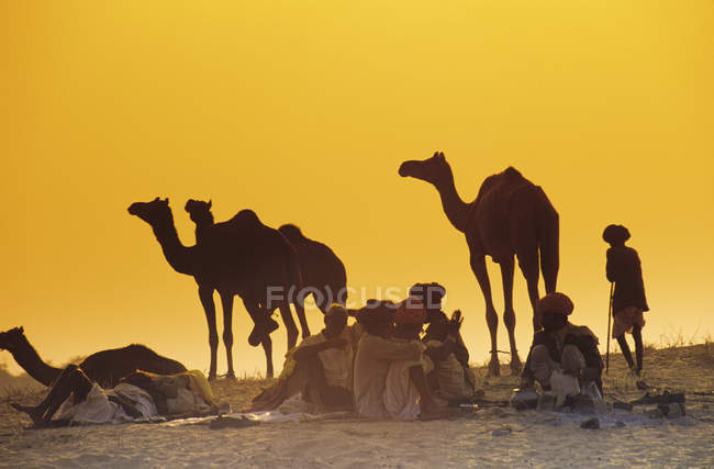 Menschen und Kamele bei Pushkar Kamelmesse bei Sonnenuntergang, Pushkar, Rajasthan, Indien — Stockfoto