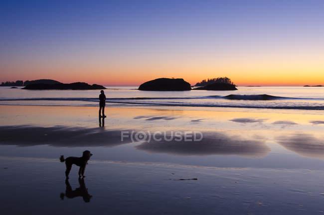 Людина ходьбі Пудель собака на заході сонця на пляжі Маккензі, Tofino, Британська Колумбія, Канада — стокове фото