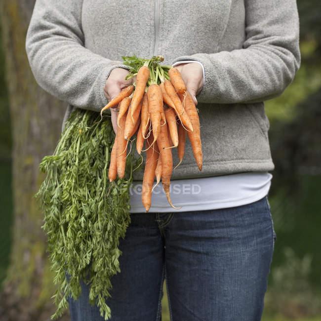 Woman holding bunch of fresh organic carrots. — Stock Photo