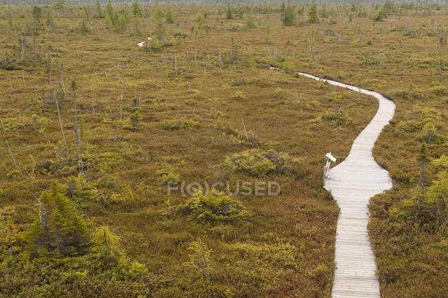 Высокий угол вид Тропа болота в Национальный парк Кучибогвак, Нью-Брансуик. — стоковое фото