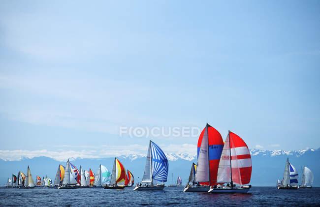 Swiftsure sailboat race at spinnaker start, Victoria, Vancouver Island, British Columbia, Canada. — Stock Photo