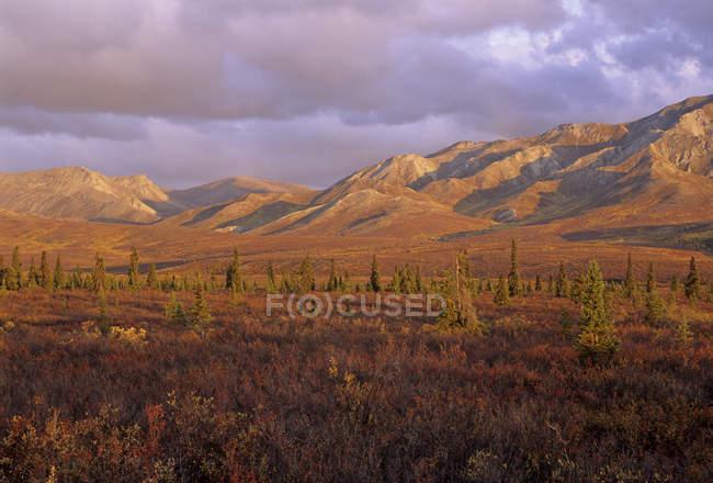 Paisaje del Parque Nacional de Denali en Alaska interior con montaje Mckinley, Estados Unidos de América. - foto de stock
