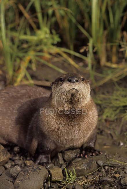 Річка otter біля передгір'я потік Монтана, США — стокове фото