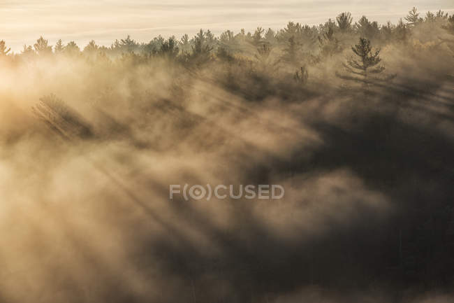 Sunlight through mist in depths of Barron Canyon in Algonquin Park, Ontario, Canada — Stock Photo
