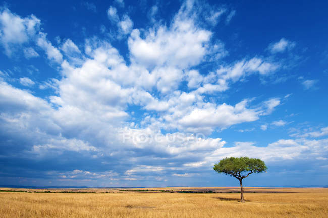Plain meadow and cloudy blue sky with lone tree in Masai Mara Reserve, Kenya, East Africa — Stock Photo