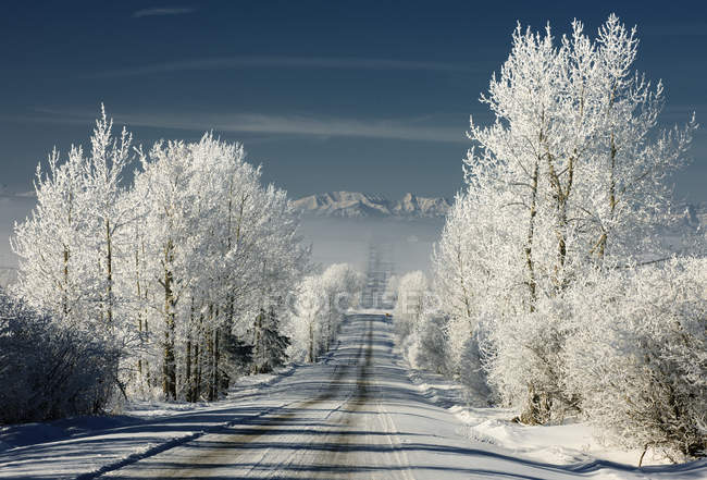 Route de campagne en hiver près de Cochrane, Alberta, Canada — Photo de stock