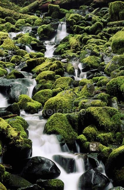 Carmanah Valley rainforest creek through mossy rocks and logs, Vancouver Island, British Columbia, Canadá . — Fotografia de Stock