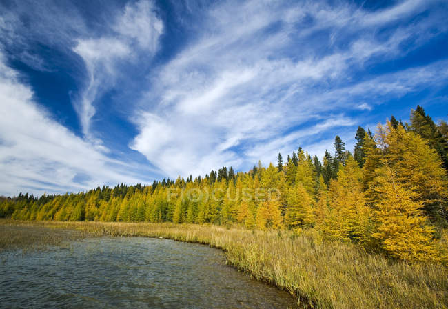 Autumn colours on tamarack trees, Duck Mountain Provincial Park, Manitoba, Canada — Stock Photo