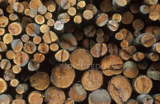 Grumes de bois de chauffage hachés de différentes tailles, cadre complet — Photo de stock