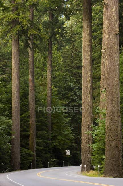 Autostrada solitario e cedri giganti nella Cathedral Grove Provincial Park, isola di Vancouver, Columbia britannica, Canada — Foto stock