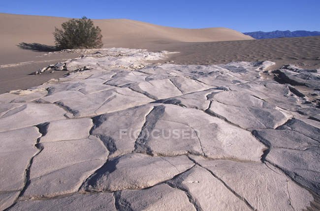 Mesquite Dunes sandstone and bush in sunlight, Death Valley, California, USA — Stock Photo