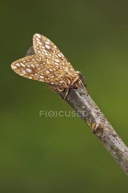 Primer plano de las polilla encaramada en la rama en bosque tropical. - foto de stock