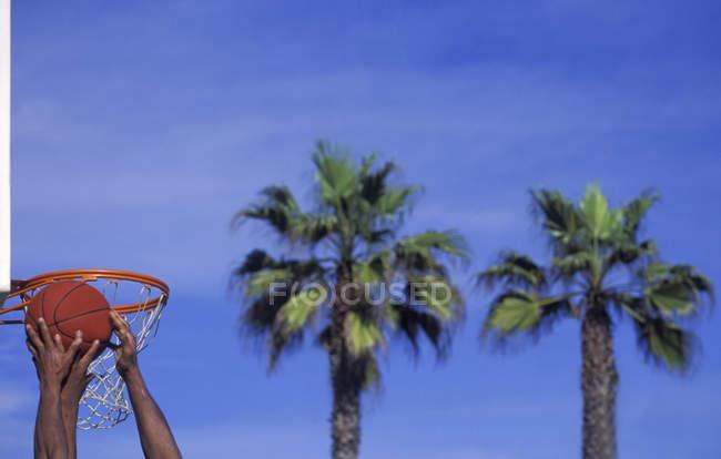 Баскетболисты захватывают отскок, пальмы на заднем плане, Венеция-Бич, Лос-Анджелес, США . — стоковое фото