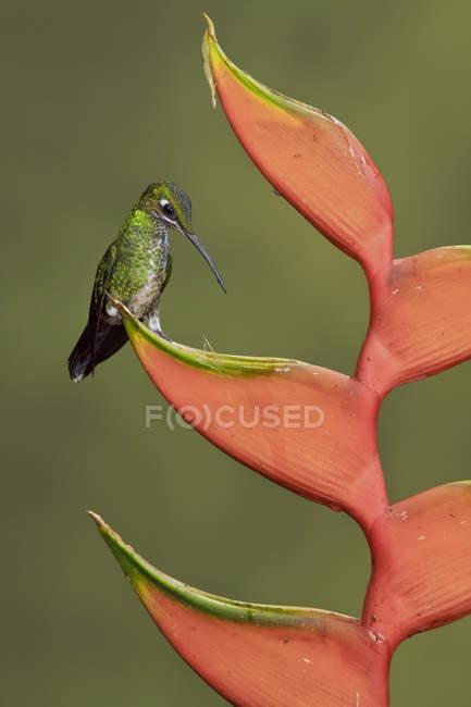 Зелений коронований brilliant сиділа на гілці екзотичних рослин, Закри. — стокове фото