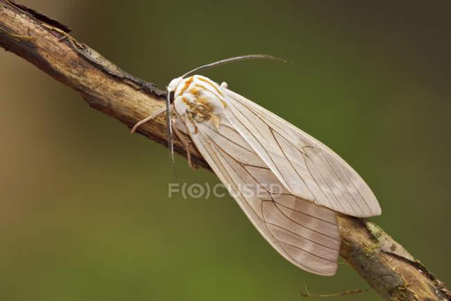 Крупным планом экзотических бабочек, сидели на ветке в тропическом лесу. — стоковое фото