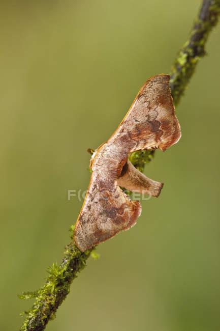 Primo piano del lepidottero esotico appollaiato sul ramo in foresta tropicale. — Foto stock