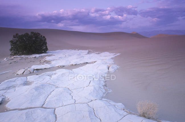 Mesquite Dunes sandstone and bush at dusk, Death Valley, California, USA — Stock Photo