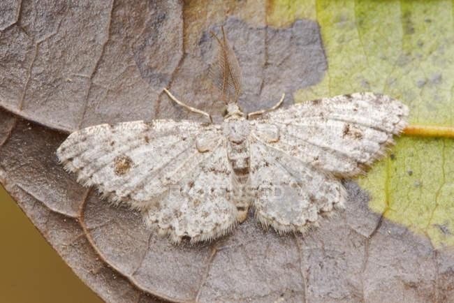 Primo piano del lepidottero esotico arroccato sul foglio nella foresta tropicale. — Foto stock