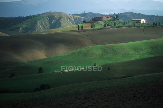 Rural countryside and green farmland with grazing sheep in Tuscany, Italy — Stock Photo