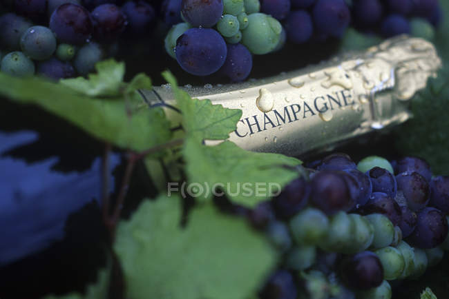 Bottle of champagne with grapes and water drops, close-up — Stock Photo