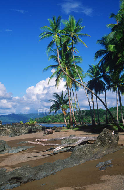 Beach with palm trees near Drake Bay in Corcovado National Park, Costa Rica — Stock Photo