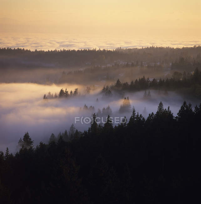 Niebla matutina sobre el bosque en Gibsons, Sunshine Coast, Columbia Británica, Canadá . — Stock Photo