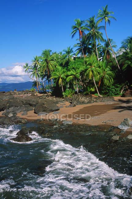 Пляжі з пальмами Дрейк бухти в Національний парк Корковадо, Коста-Ріка — стокове фото