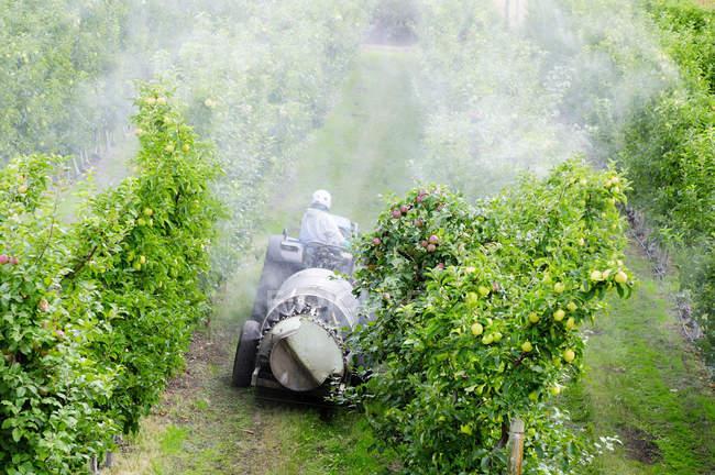 Vue en angle élevé d'un homme méconnaissable chevauchant un tracteur et pulvérisant un verger de pommiers dans le lac Country, Colombie-Britannique, Canada — Photo de stock