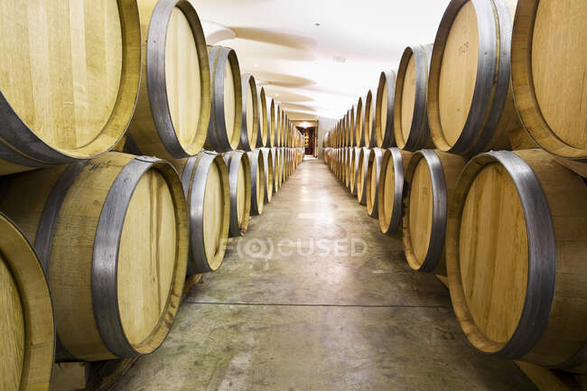Caminho através de barris de carvalho para vinho na adega, Niagara no lago, Ontário, Canadá — Fotografia de Stock