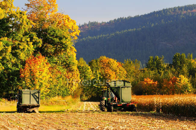 Truck, tractor and combiner for harvesting corn silage, Cowichan Bay, British Columbia, Canada — Stock Photo