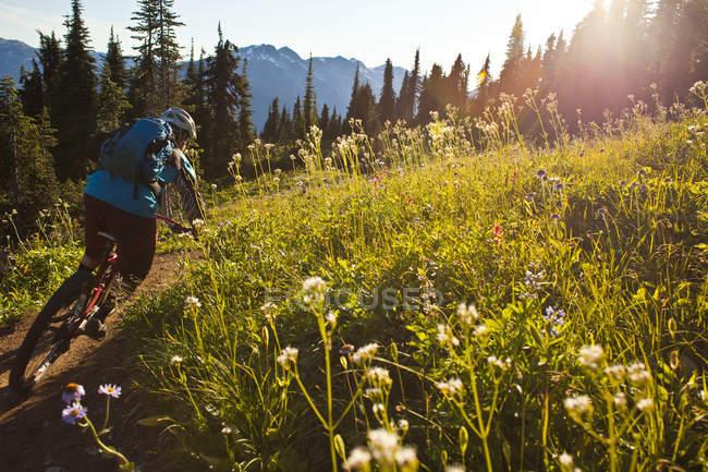 Male mountain biker riding alpine meadow at Frisby Ridge trail in Revelstoke, British Columbia, Canada — Stock Photo