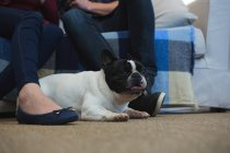 Couple with french bulldog dog in living room at home, partial view of people — Stock Photo