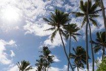 Palmeras en la playa en un día soleado - foto de stock