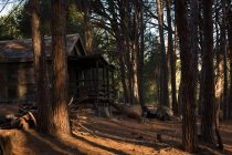 Log cabin in the forest on a sunny day — Fotografia de Stock
