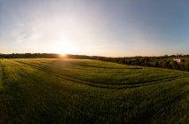 Vue du champ vert au coucher du soleil, province de munster — Photo de stock