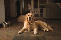 Perro Labrador relajante de una casa - foto de stock