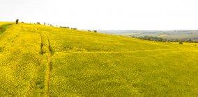Vista del campo su un pendio in una giornata di sole — Foto stock