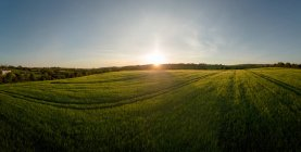 View of crops field during sunset, province of munster — Stock Photo