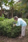 Senior woman photographing plants with a mobile phone — Stock Photo