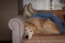 Дівчина з собакою розслаблюючим у вітальні на дому — стокове фото