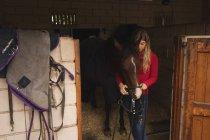 Девушка, надевая ремень рот лошади в Ранчо — стоковое фото