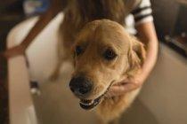 Девушка, очистка собаку в ванной комнате дома — стоковое фото