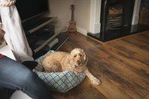 Cão sentado ao lado da mulher na sala de estar em casa — Fotografia de Stock