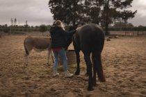 Vista traseira da menina alimentando seu cavalo no rancho — Fotografia de Stock