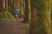 Vista posteriore dell'uomo che pareggia nella foresta — Foto stock